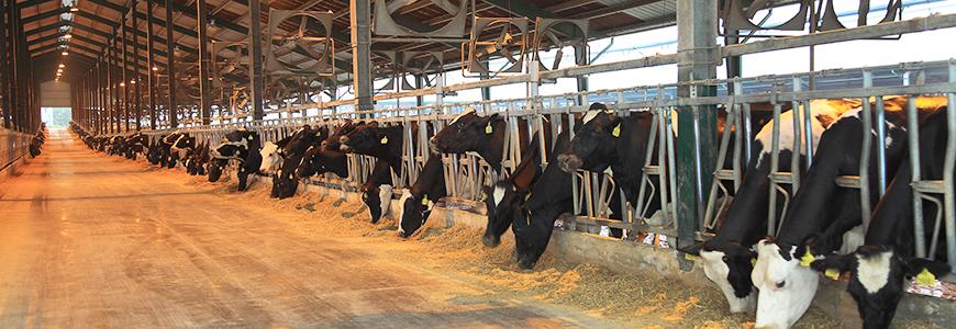 Interloop Dairies Limited