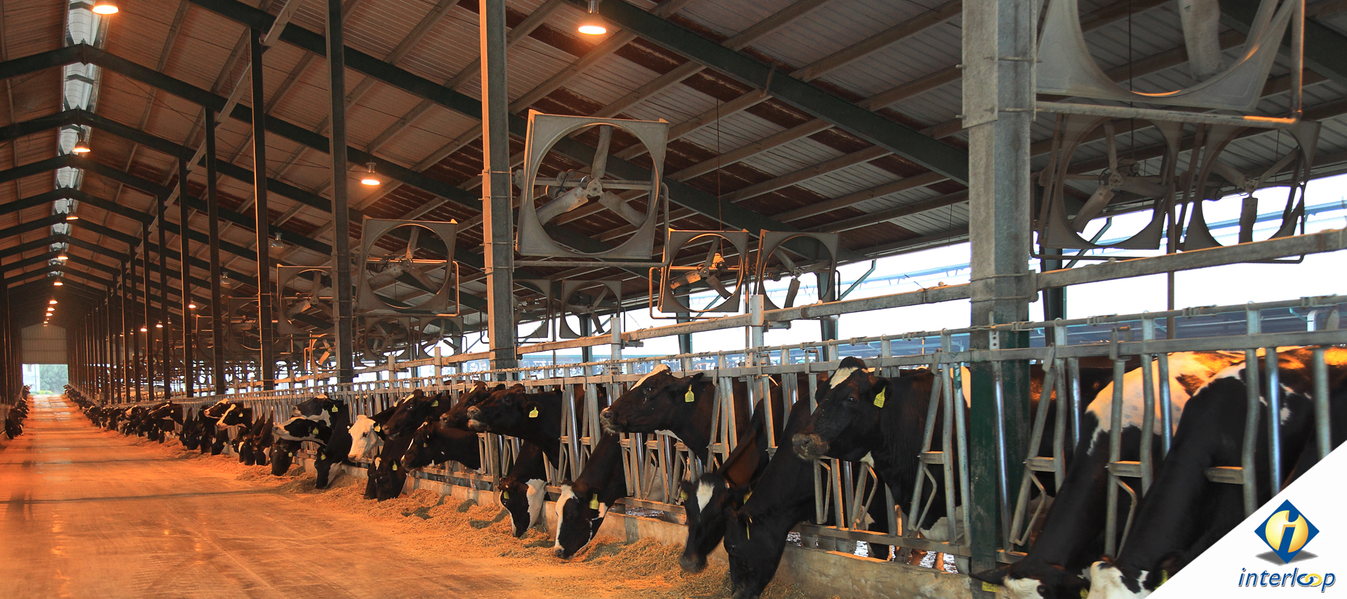 A Growing Dairy Business With The Highest Quality Products